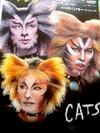 cats_100805