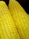 Corn_090906